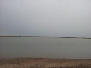 Espiguette inondée